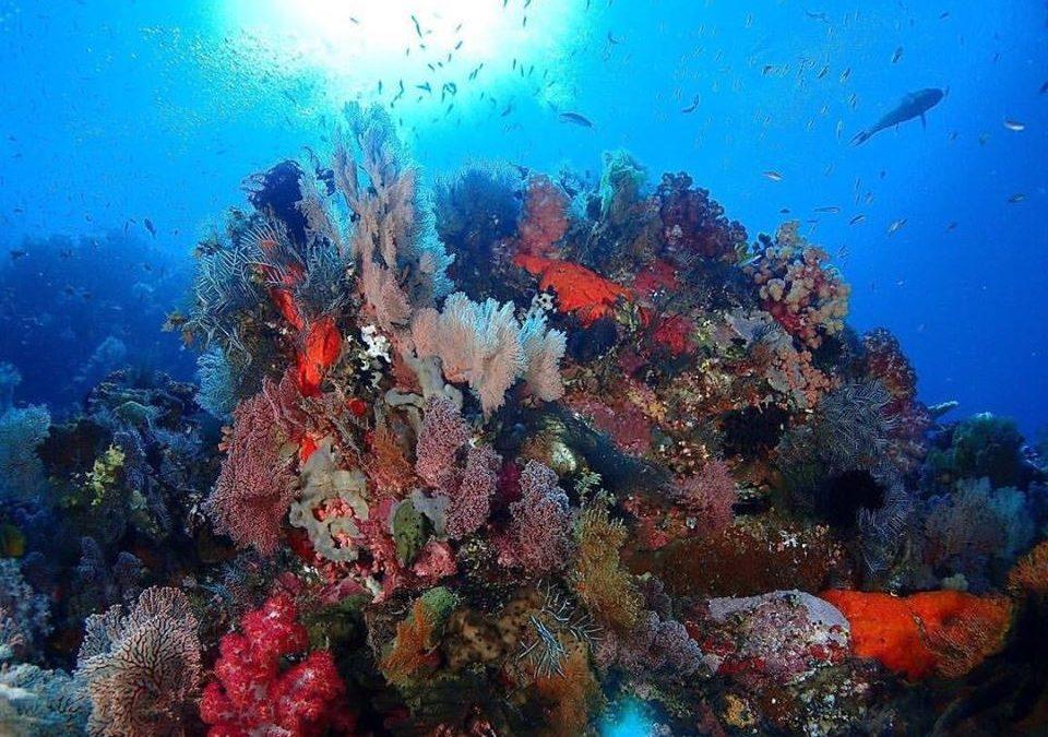 Best Dive Site in Raja Ampat